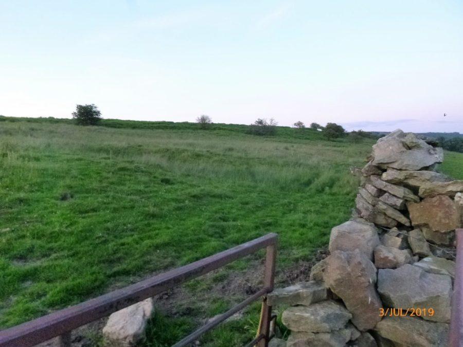 Cow Pasture at Ellerlands Edge, Castle Bolton