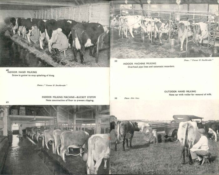 Milking techniques from 'British Dairying' (1948) by Frank H Garner