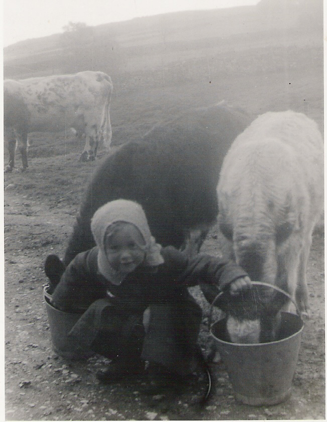 Nell Bank Farm, Walden. Joanne & Roundy the calves with a young Sally Dobbing. Courtesy of Sally Stone