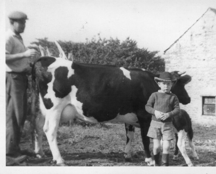 Suzy the cow and her calf at Town Head with dad and younger brother, early 1960s. Courtesy of Sally Stone