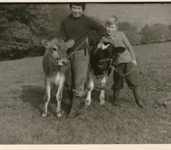 Halter training calves Morris and Brandy. Courtesy of Sally Stone