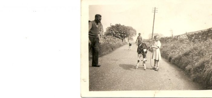 Eleanor learning to lead a calf with her father, 1956. Courtesy of Eleanor Scarr
