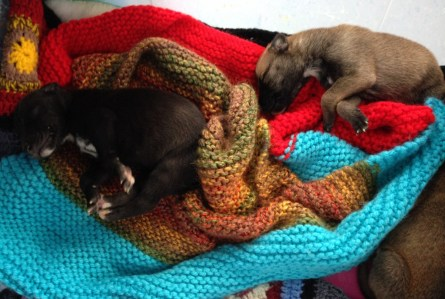 Two of the puppies looking for new homes