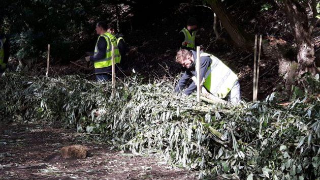 Volunteers tackle weeds