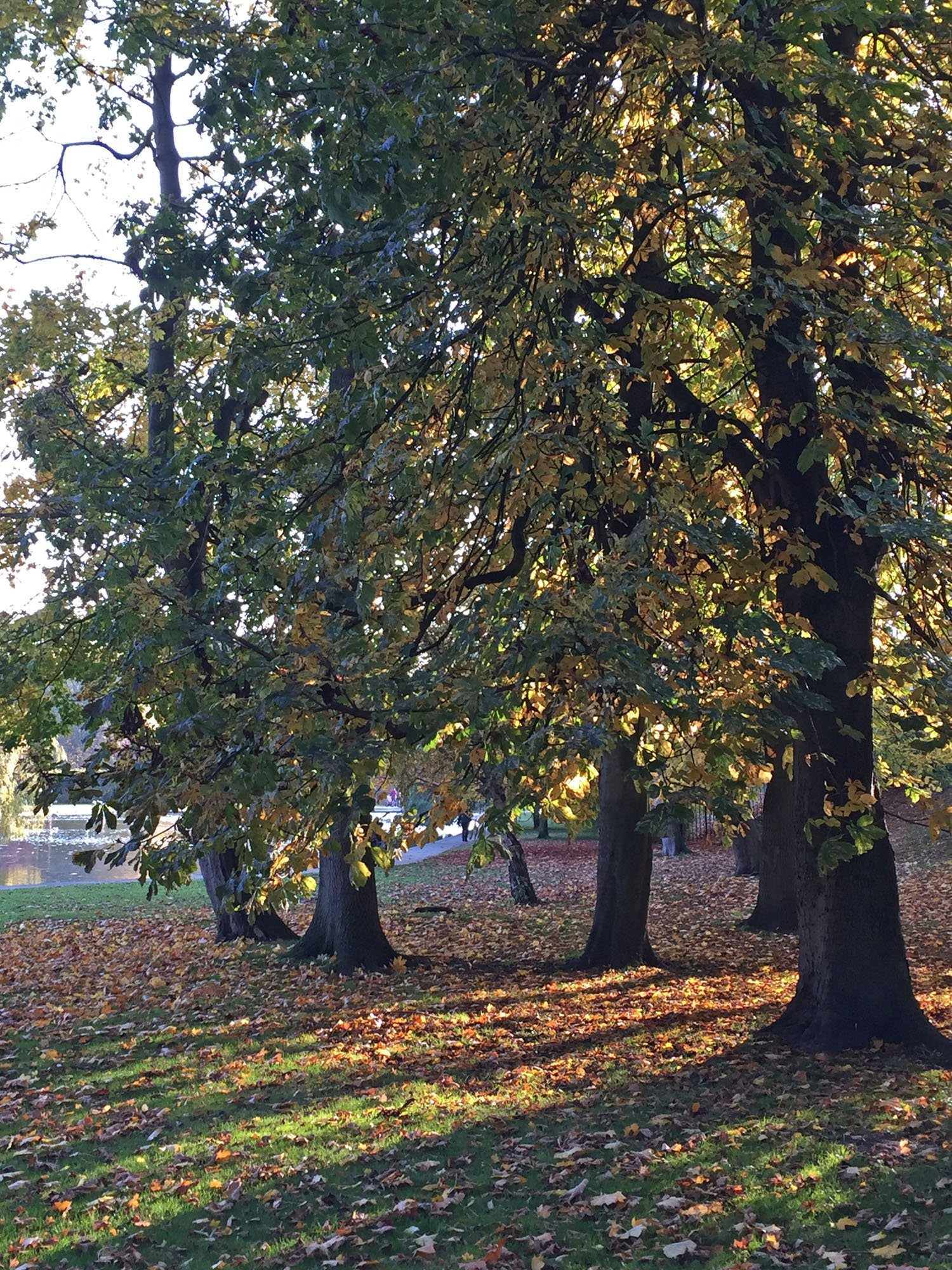 Autumn Colours - Rowntree Park - York