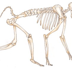 Chimpanzee Skull Diagram 1971 Honda Z50 Wiring Anth 2140