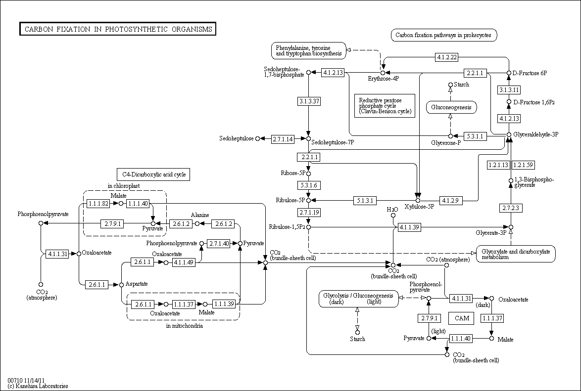 The Kegg Pathway Database
