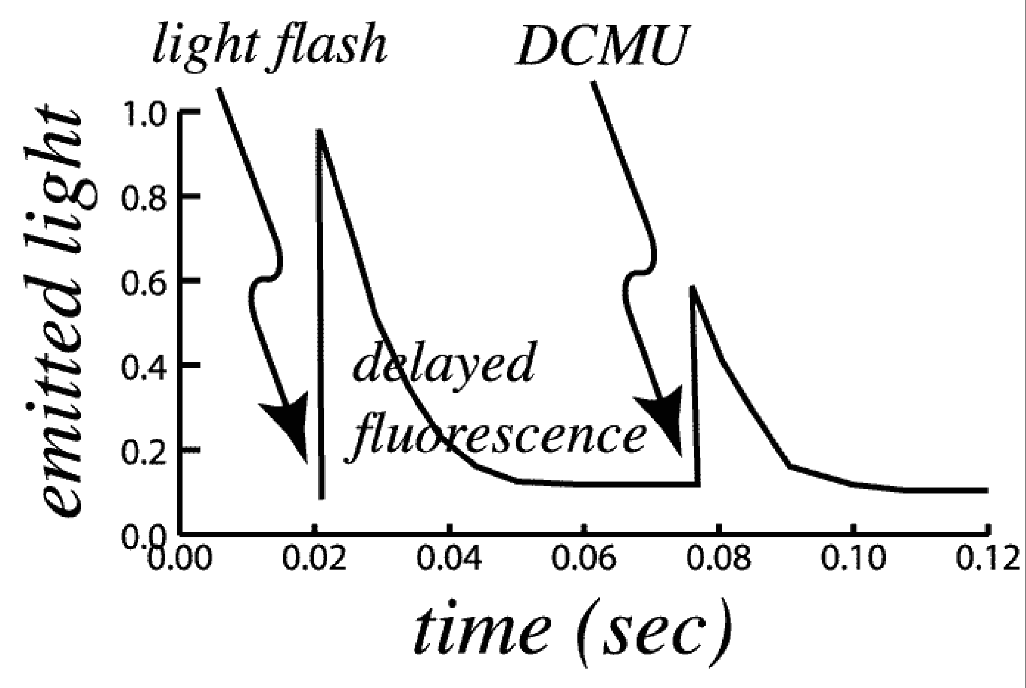 experiment demonstrates delayed fluorescence using DCMU