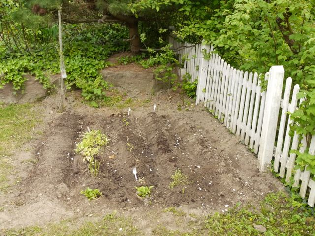 Vegetable patch in corner of the lawn