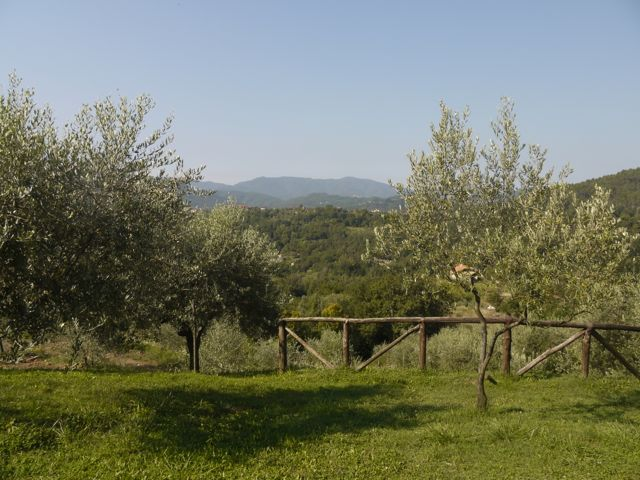 The view of the mountains from the olive farm we stayed at.