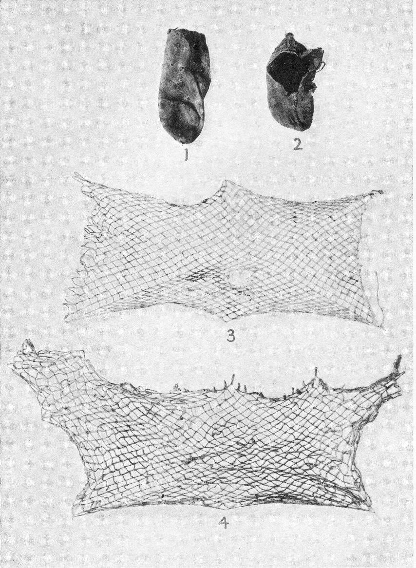 Miwok Material Culture: Indian Life of the Yosemite Region