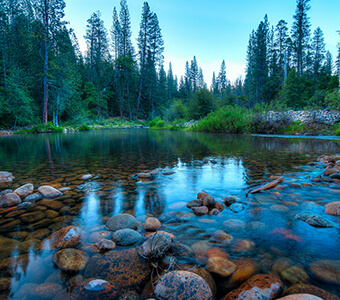 Wawona Campground  Discover Yosemite National Park