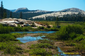 Stream in Tuolumne Meadows