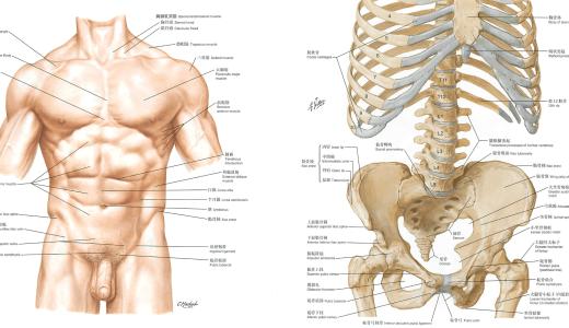 カラダファクトリーの骨盤矯正のメカニズム。