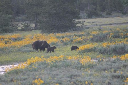 Mother with 2 cubs