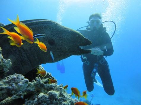 mooray eel big