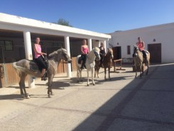 riding group equine