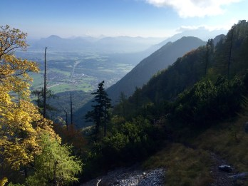 Salzburger Land forest