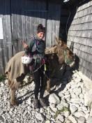 Donkey Esel Reichenhaller Haus Hochstaufen