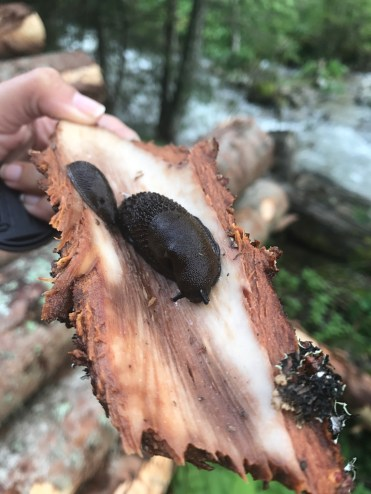 Snail wood forest