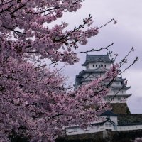 A day trip to Himeji Japan (and why you need to visit); Cory Varga; You Could Travel