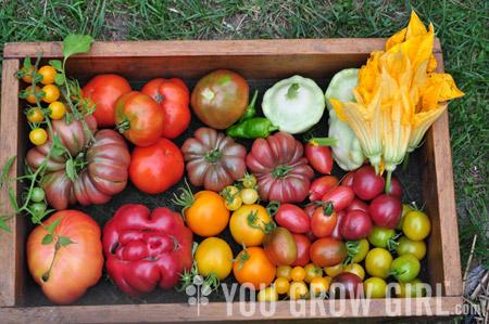 You Grow Girl - Tomato Growing Guide