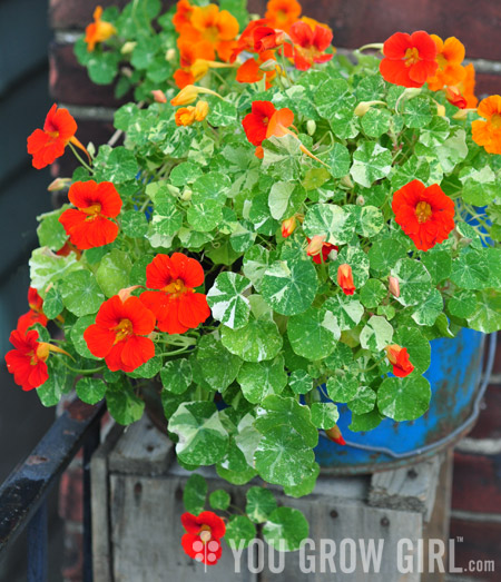 You Grow Girl - Herbs and Edible Flowers Growing Guide