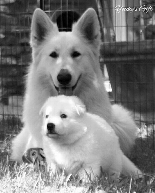 blue ed i cuccioli