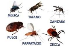 parassitologia
