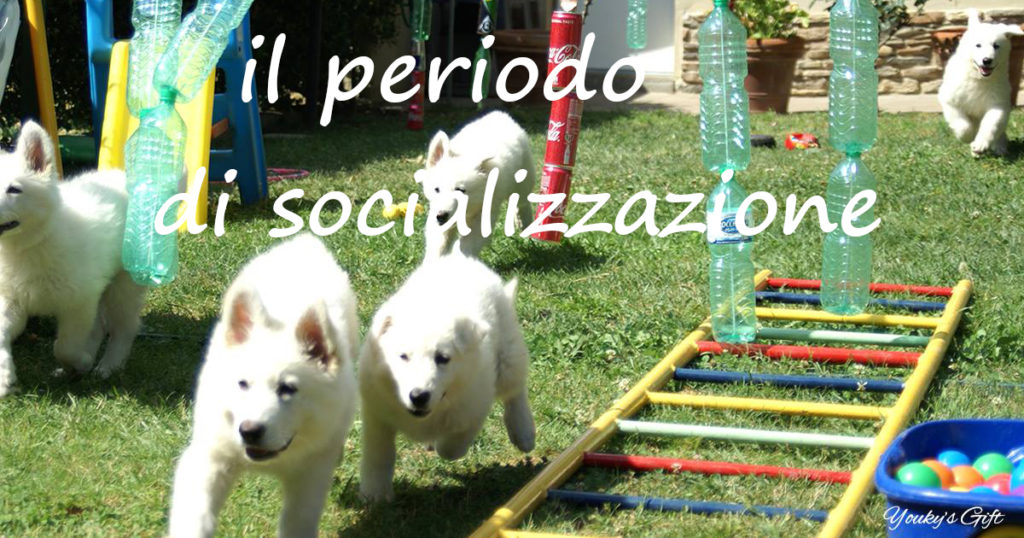 periodo socializzazione cucciolo Pastore Svizzero