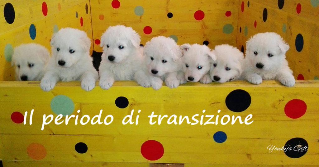 periodo transizione cucciolo pastore svizzero