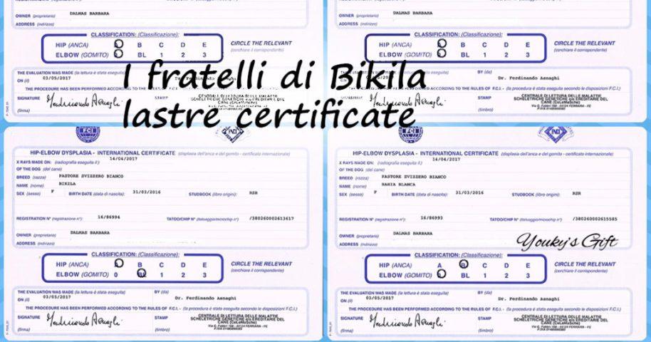 fratelli BIKILA lastre certificate cuccioli