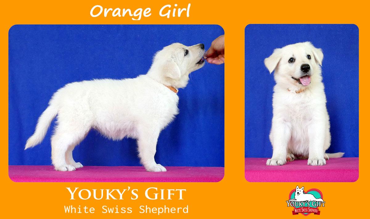 orange girl cucciolata H cuccioli 6 settimane