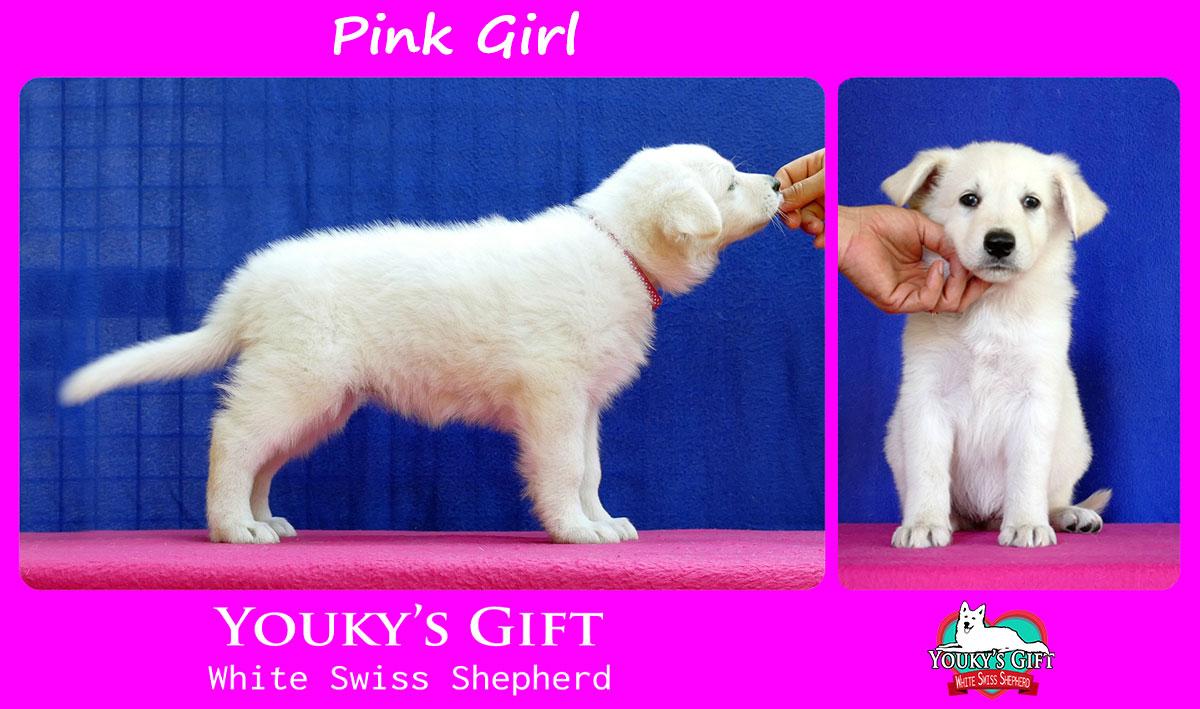 pink girl cucciolata H cuccioli 6 settimane