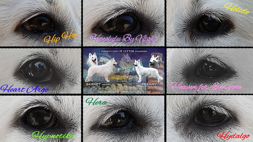 pigmento cuccioli cucciolata H pastore svizzero