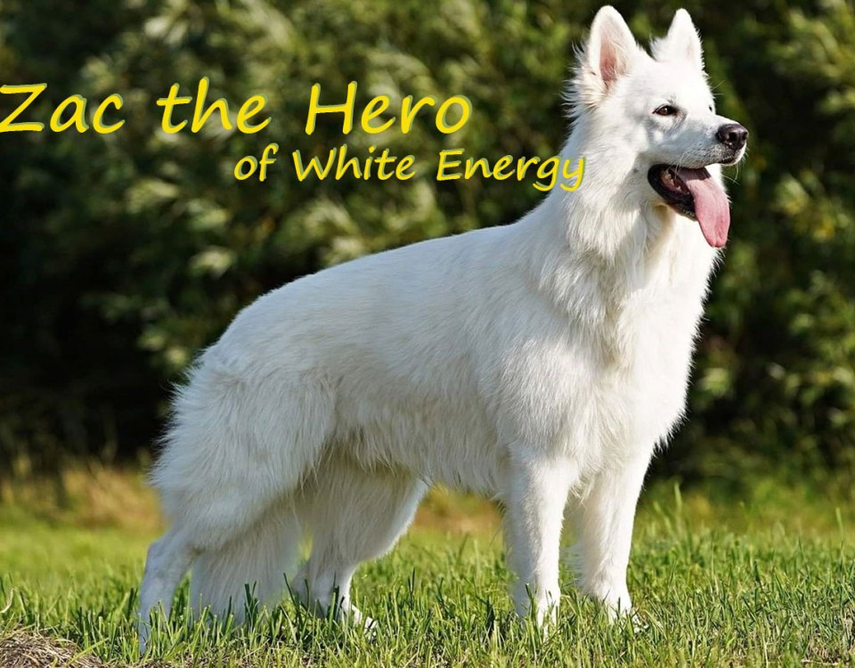 Zac The Hero of White Energy