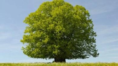 Photo of Magia drzew.
