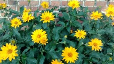 Photo of Kolor żółty