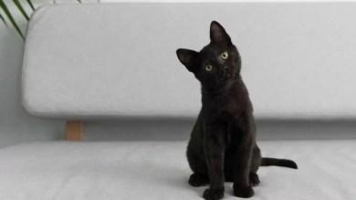 Photo of Czarny kot