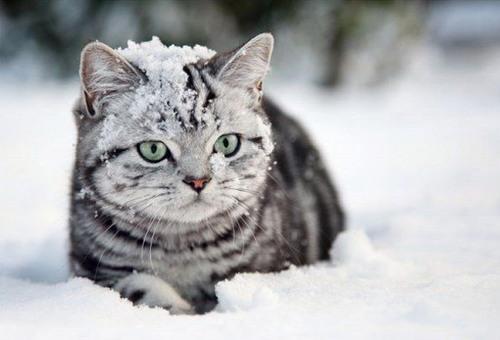 Cute Llama Wallpapers Зимние кошки и новогодние кошки Youloveit Ru