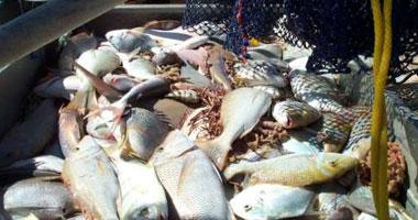 أسماك فاسدة فى طريقها إلى الأسواق من بور سعيد
