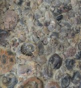 fossils on a wall