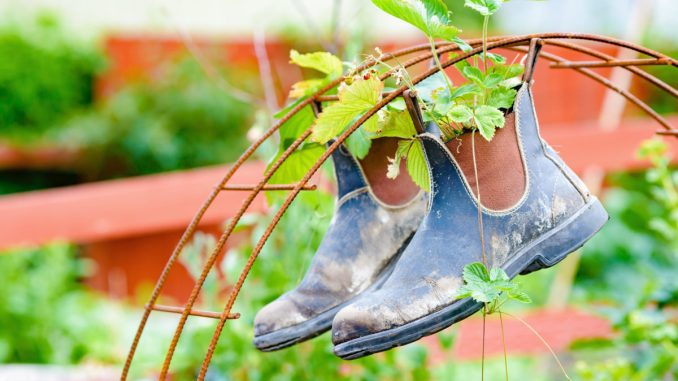 Recycle or up cycle in the garden. Here is a pair of boots hanging from iron rebar. Boots contain plants of wild strawberries. younfolded blog pay it forward friday