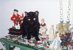 black cat named salem next to ornaments on table younfolded blog pet series
