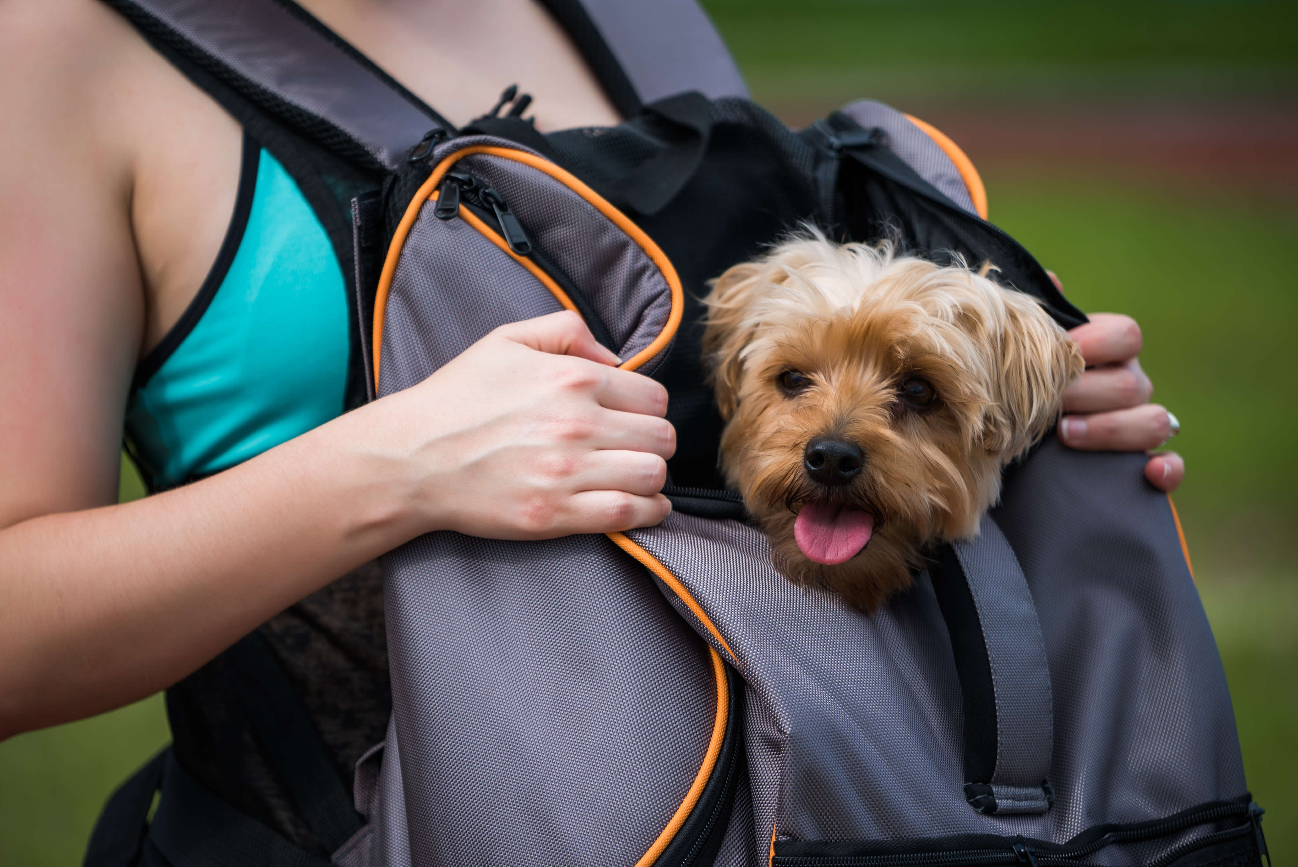 Lambo Backpack from Pet Magasin