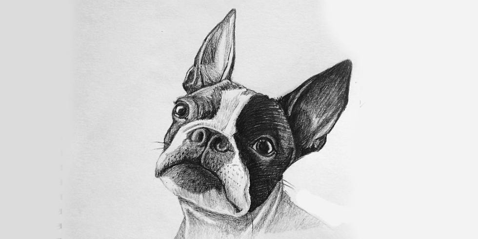 image of sketch of french bull dog