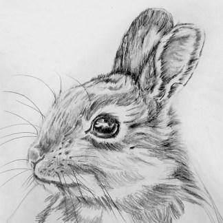rabbit sketch composition