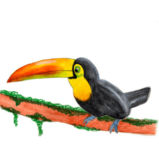 drawing of a Toco toucan
