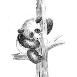 pencil drawn panda on a tree