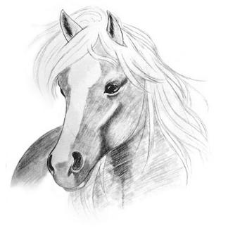 pencil drawn horse